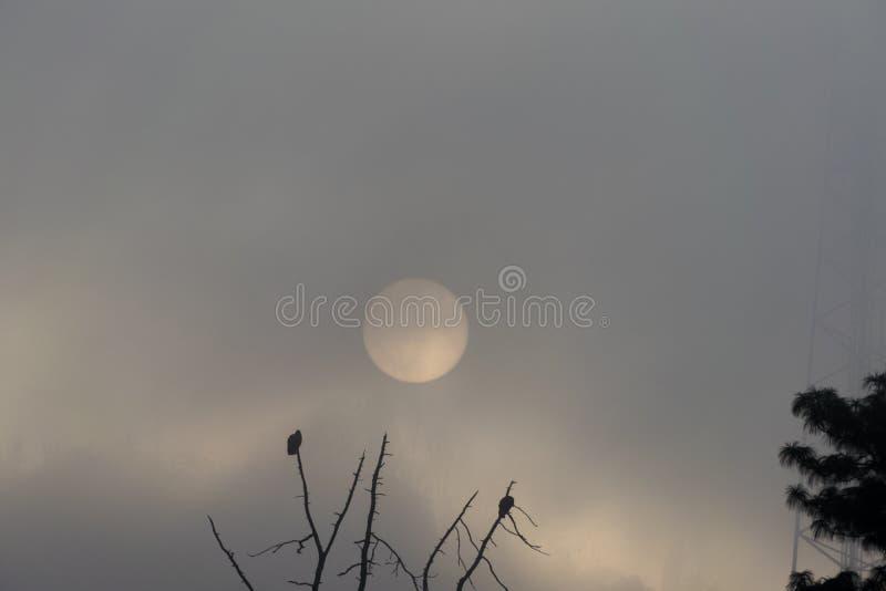 日出在危地马拉,与离开飞行的肉食的树 在薄雾的太阳 免版税库存照片