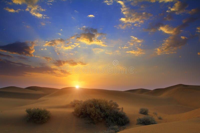 日出在沙漠 免版税库存图片