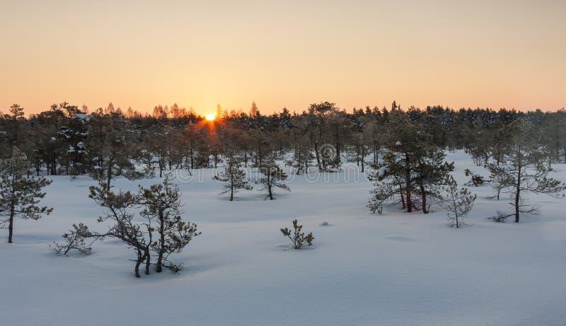 日出在沼泽在冬天 库存照片