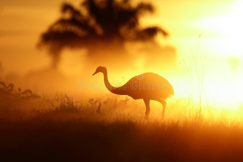 日出在潘塔纳尔湿地,巴西 库存照片