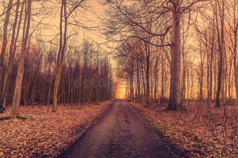 日出在路结束时 免版税库存图片