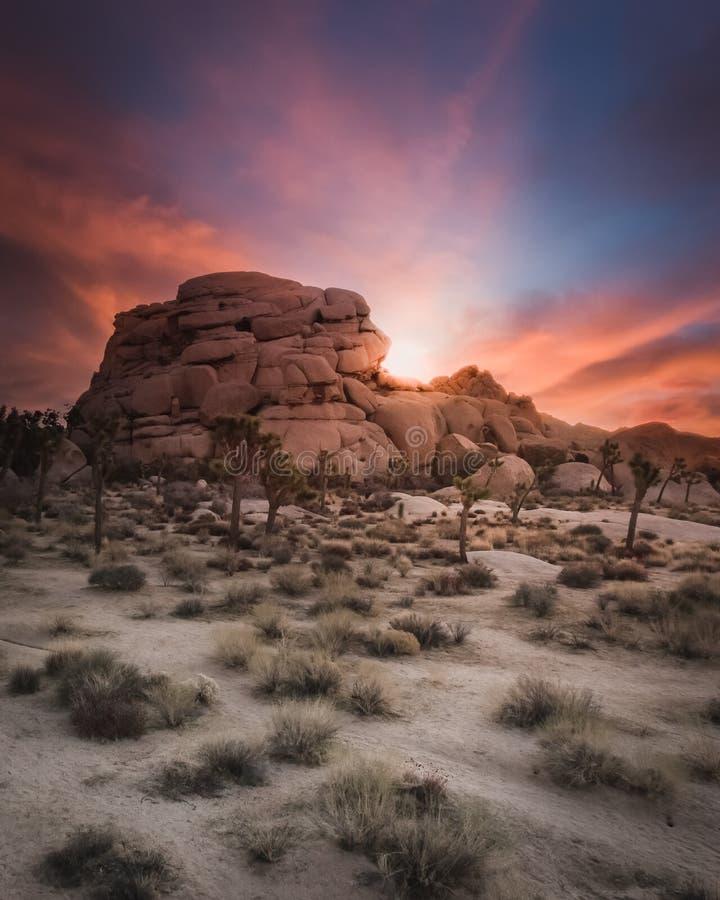 日出在高沙漠-约书亚树国家公园 图库摄影
