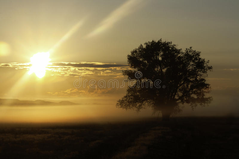 日出或日落与有薄雾的树 免版税库存照片