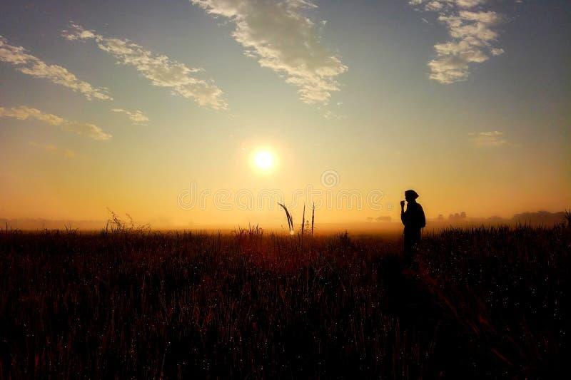 日出曲调 在rajshahi,孟加拉国的一个庄稼领域 免版税图库摄影