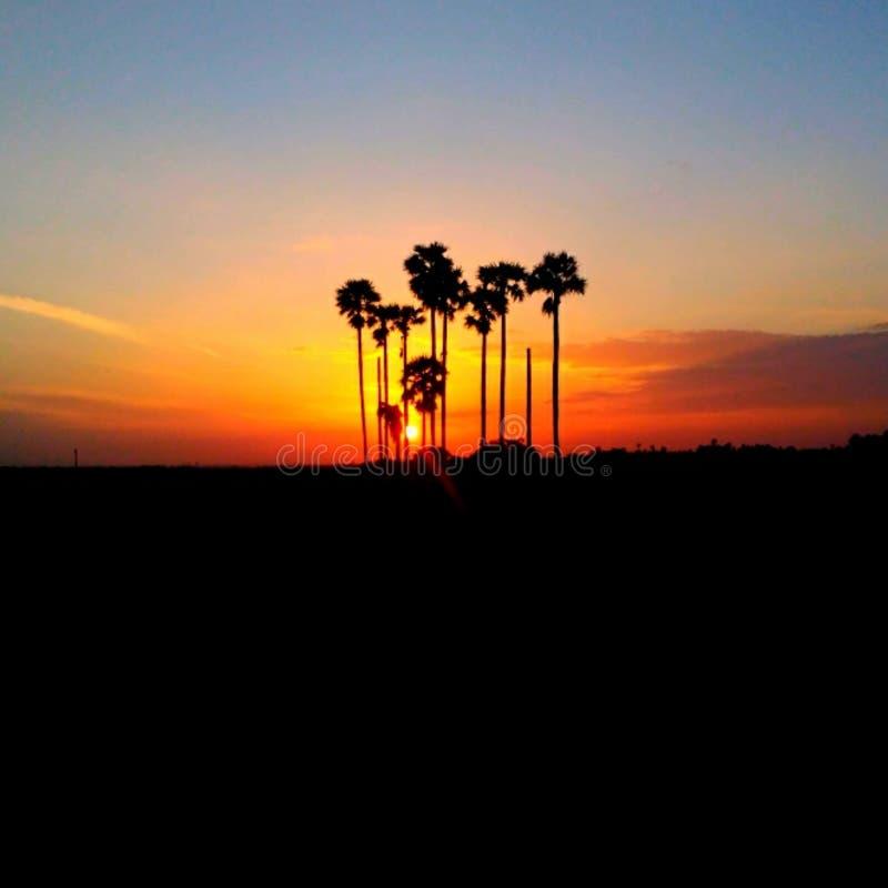 日出树 库存照片