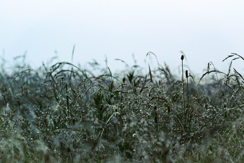 日出的有雾的草甸在喀尔巴汗 在野花的早晨露水 库存照片