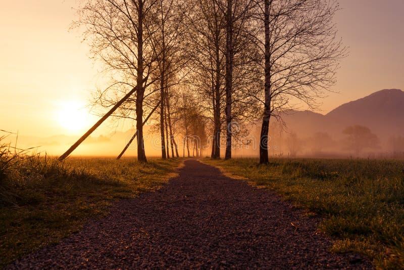 日出芦苇沼泽地kochelsee巴伐利亚山 免版税库存图片