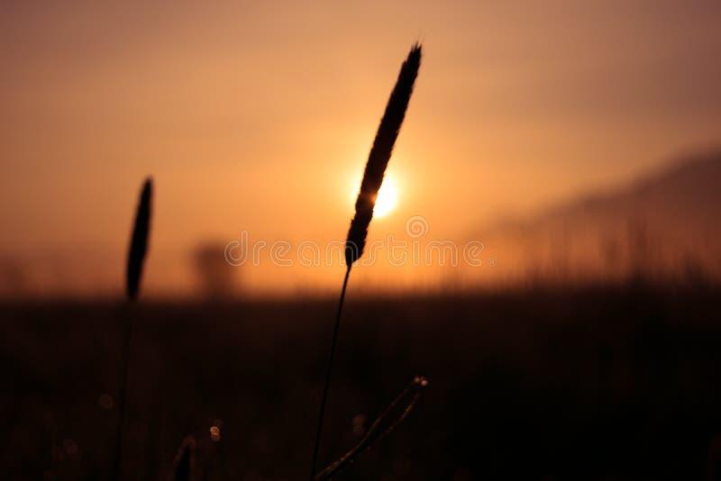 日出芦苇沼泽地kochelsee巴伐利亚山 免版税图库摄影