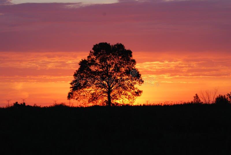 日出远见 库存图片