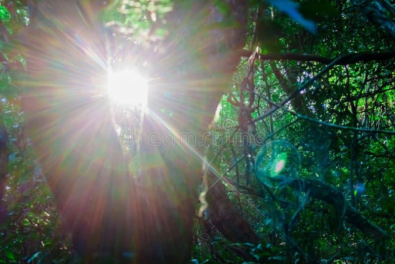 日出通过在一次远足期间的一棵树在普腊亚Santinho,Florianà ³ polis,圣塔卡得里那,巴西 免版税图库摄影