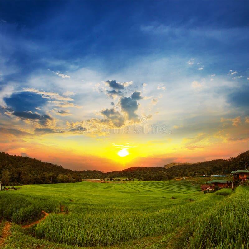 日出露台的米领域在Chiangmai 免版税库存图片