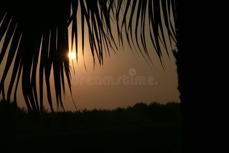 日出 看太阳通过棕榈树叶子  库存图片