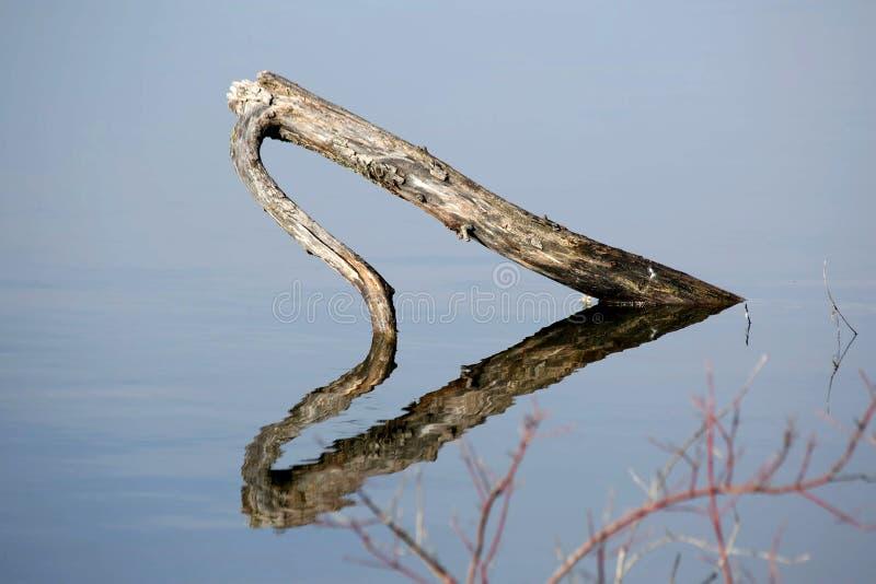 日志反射在水中 图库摄影