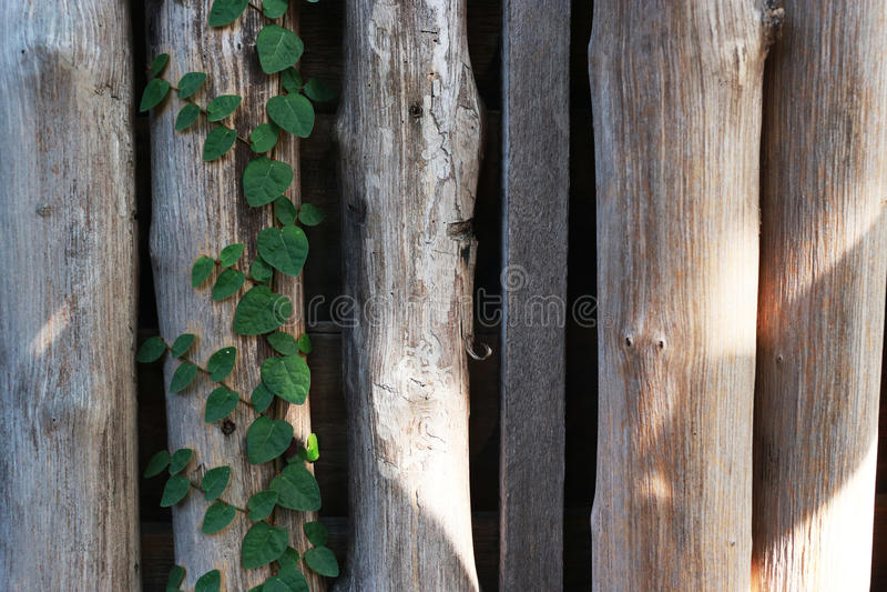 从日志和树的木墙壁作为背景纹理 免版税库存照片