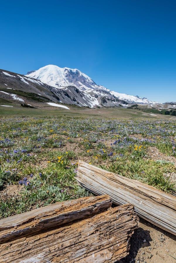日志和野花在瑞尼尔山下 库存照片
