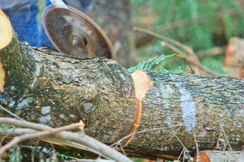 日志记录器人切开木头看见了 图库摄影