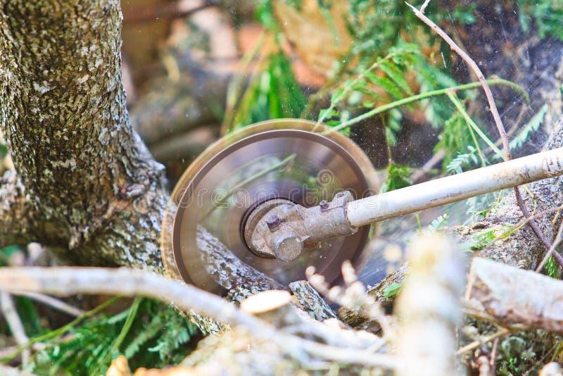 日志记录器人切开木头看见了 库存图片