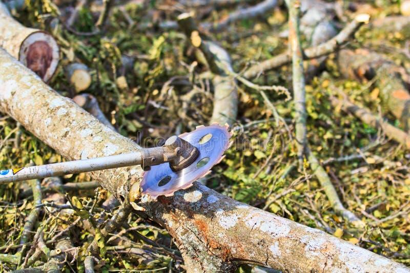 日志记录器人切开木头 库存图片