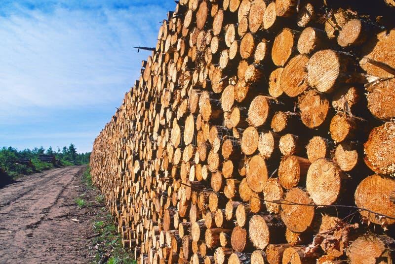 日志记录的堆杉木 库存照片