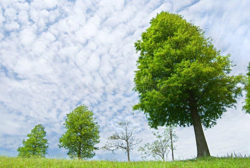 日晴朗草甸的春天 免版税库存图片
