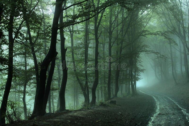 日有雾的森林公路 免版税库存照片