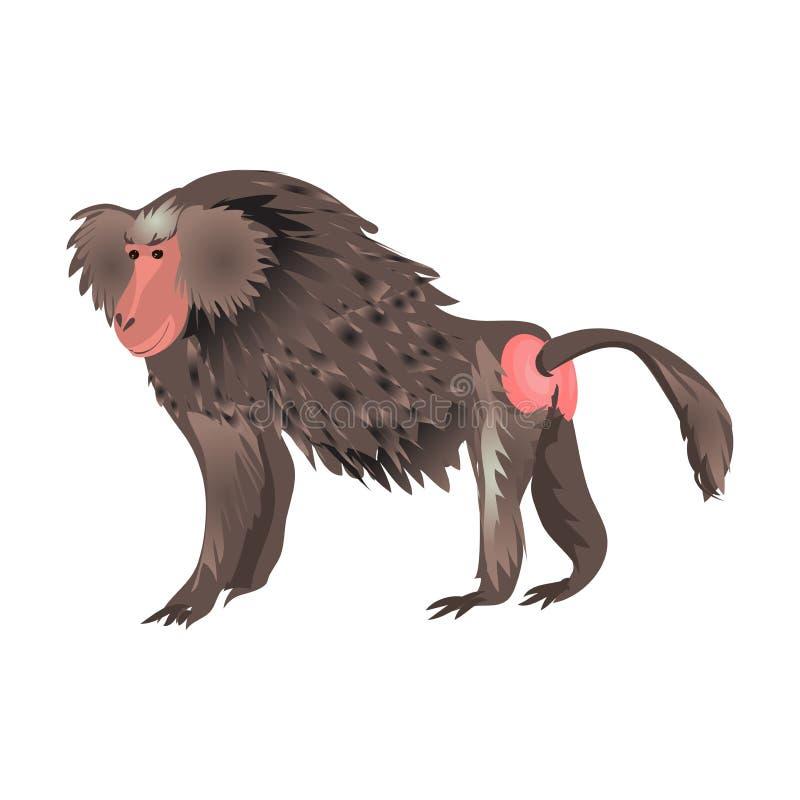 日本与红脸的短尾猿动物猴子去吃 库存例证