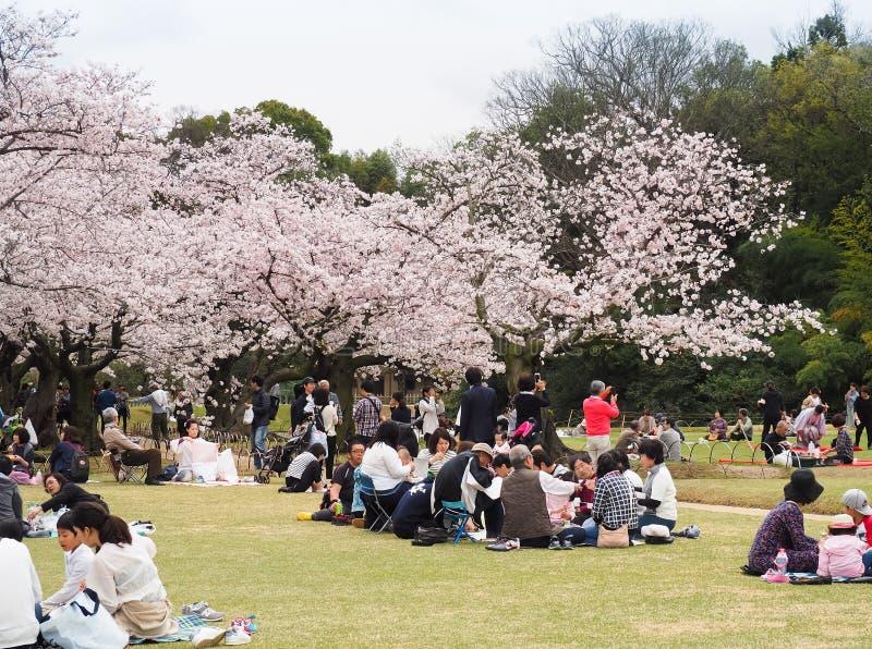 日本享用的樱花节日在公园 免版税库存图片
