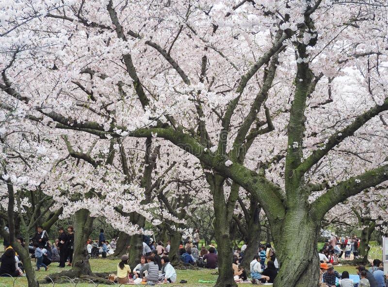 日本享用的樱花节日在公园 免版税库存照片