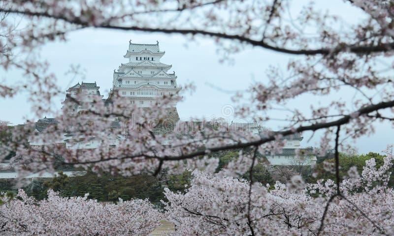 日本城堡的春天风景在清早ligh的 免版税库存照片