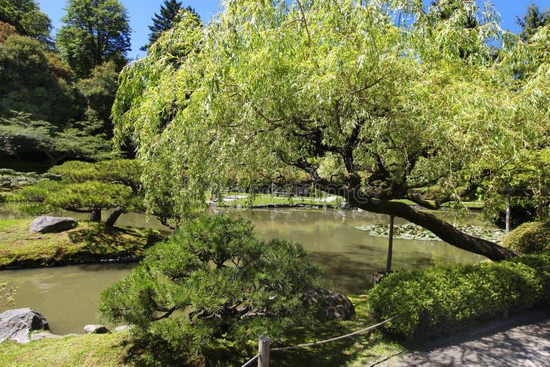 日本庭院在西雅图, WA 与池塘的垂柳树 免版税库存图片
