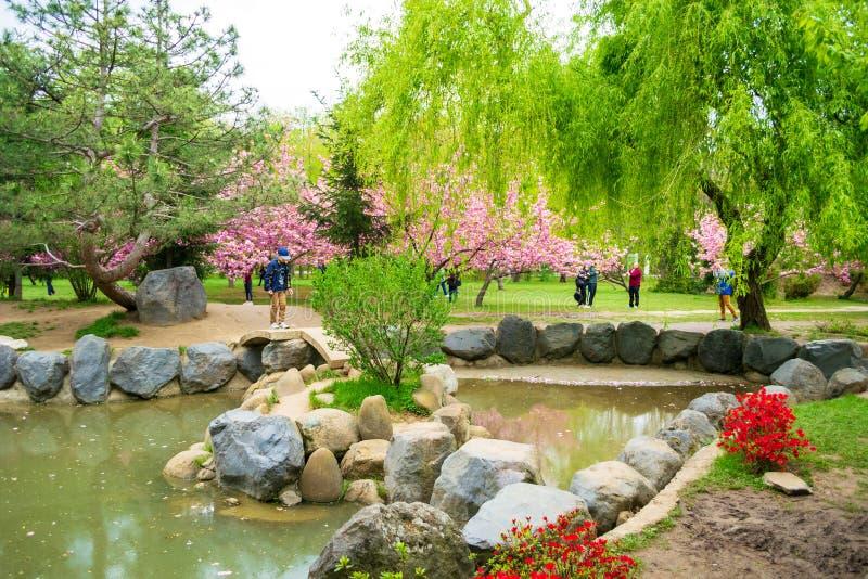 日本庭院在Herastrau公园被带来了回到生活,在日本的使馆的共同努力,布加勒斯特政府大厦 免版税库存图片