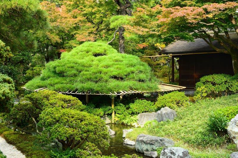 日本庭院,京都日本杉树  免版税库存照片