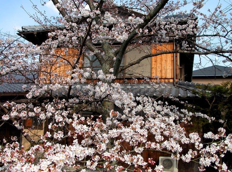 日本春天 库存图片