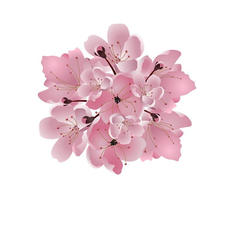 日本樱桃 桃红色樱花花束 背景查出的白色 例证 向量例证