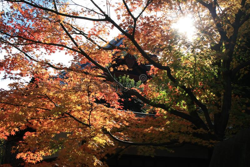 日本的寺庙在秋天 免版税图库摄影