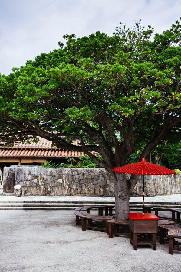 日本红色伞在大树下 库存图片