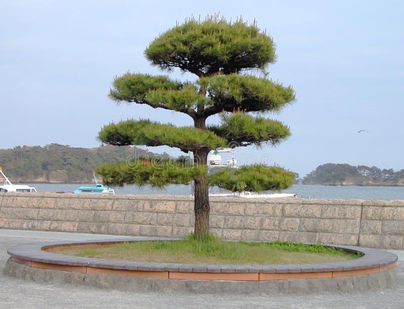 日本结构树 库存照片