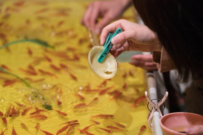 日本金鱼节日比赛 免版税库存照片