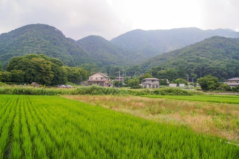日本绿色领域 免版税库存图片
