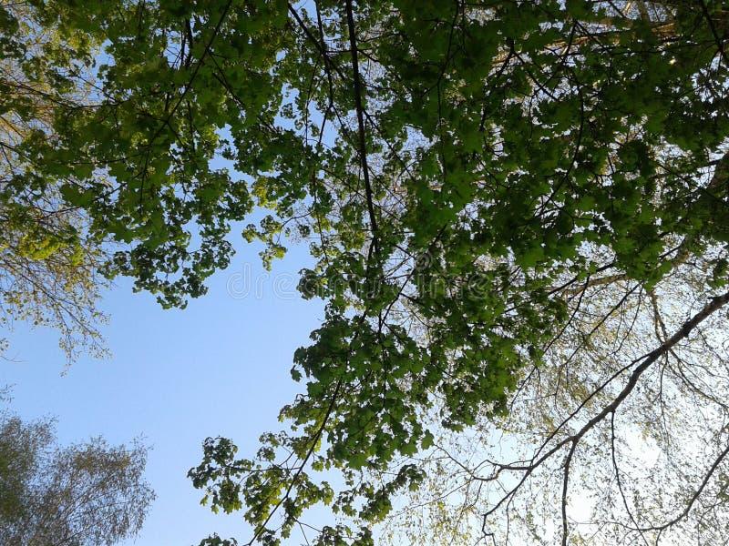 日森林春天郊区结构 库存图片