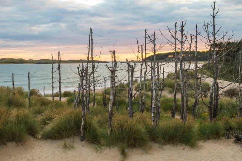 日落、沙丘和死的树 免版税库存图片