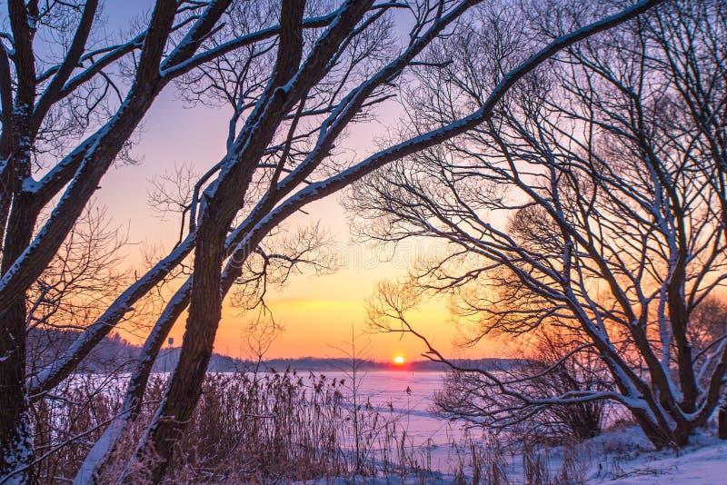 日落与积雪的湖的冬天风景紫罗兰和别针的 免版税库存图片