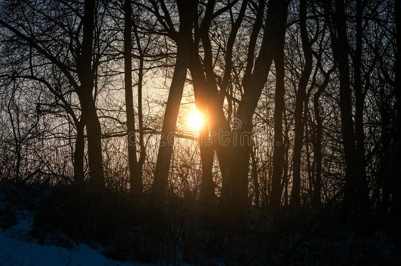 日落与草甸和森林的冬天风景在汉堡附近的格斯塔特 库存图片