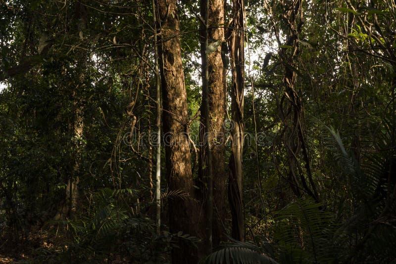 日落光在树casted在Khao亚伊国家公园 库存照片