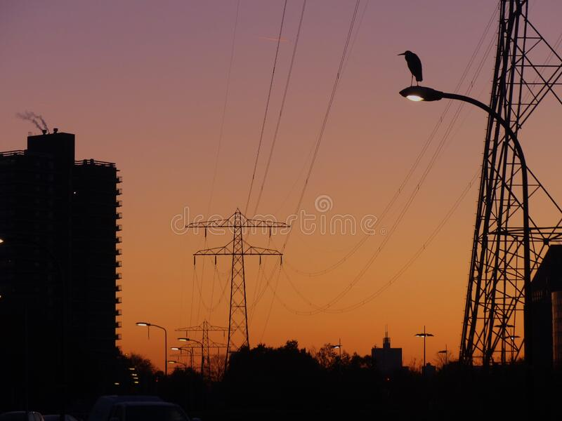 日落前的街灯上 库存图片