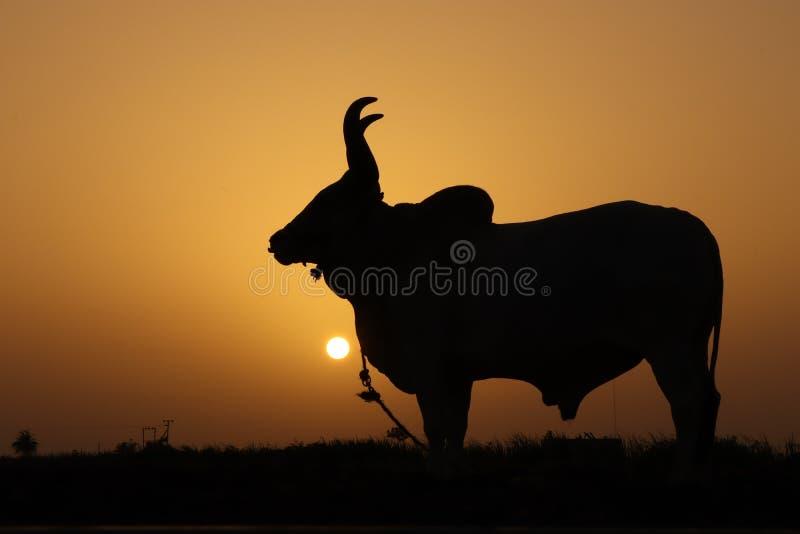 日落和动物 免版税图库摄影