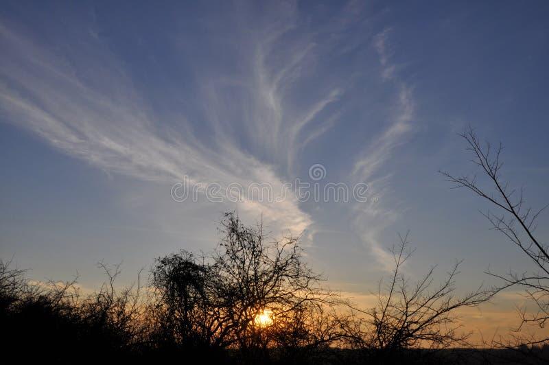 日落和日出 在的黑暗的草甸现出轮廓树 免版税图库摄影