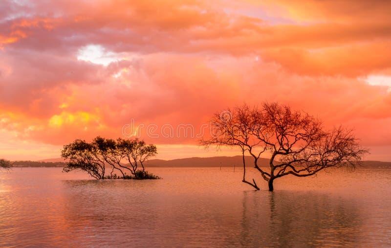 日落和暴风云在美洲红树 库存图片