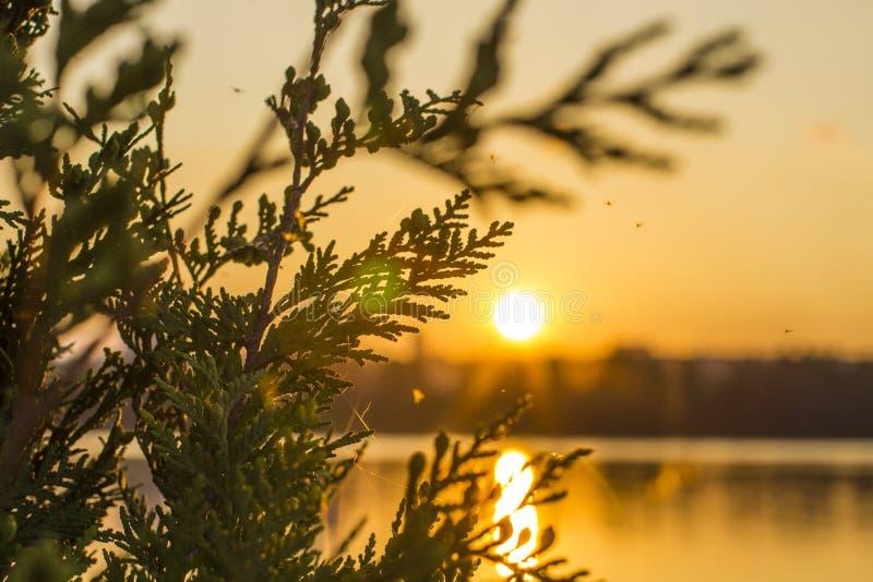 日落和树枝 免版税库存照片