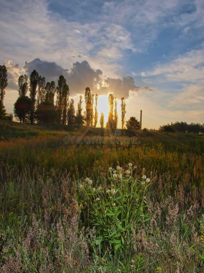 日落和灌木 decktop的Baskground 免版税库存图片